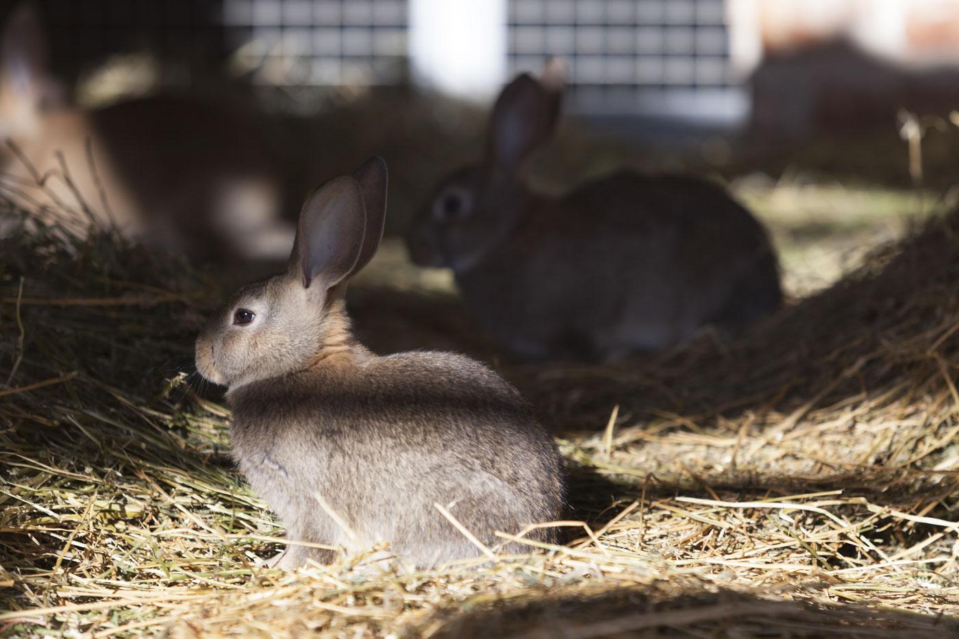 conigli cascina ranverso